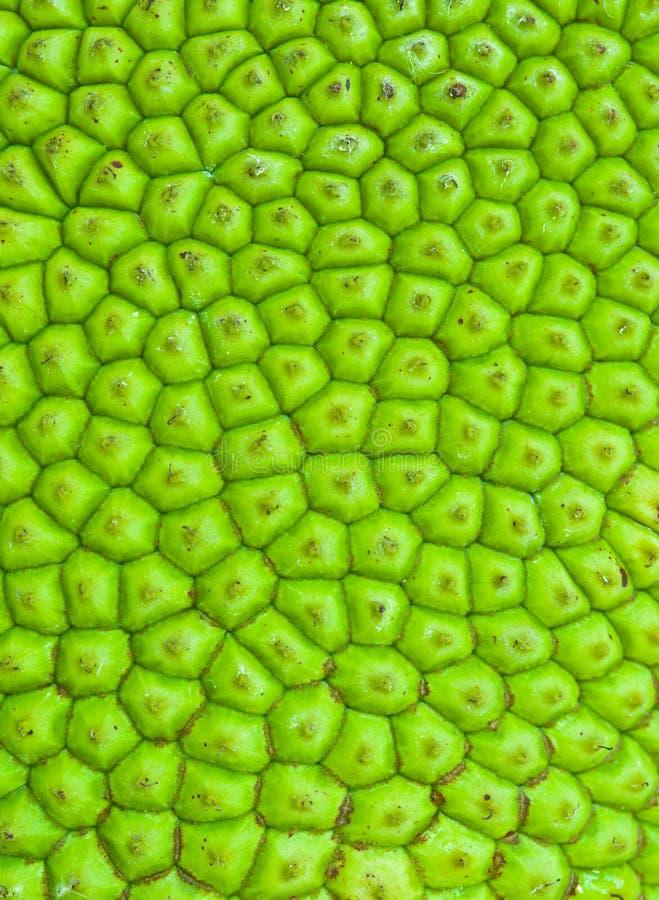 De Textuur van Jackfruit royalty-vrije stock foto's