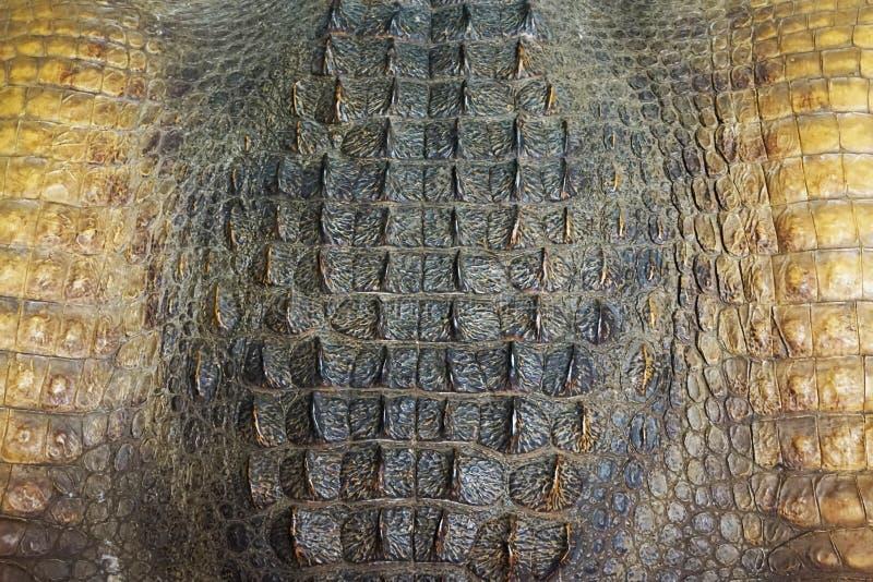De textuur van de krokodilhuid royalty-vrije stock fotografie