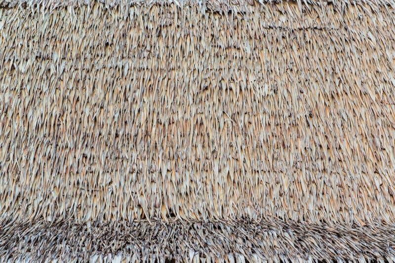 De textuur van met stro bedekt dak stock fotografie