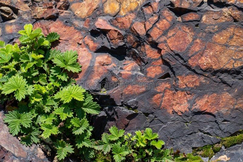 De textuur van de natuurlijke rots met groen doorbladert dicht omhoog stock foto
