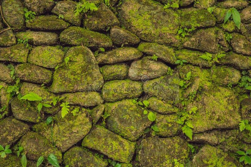 De textuur van oude steenmuur behandelde groen mos in Fort Rotterdam, Makassar - Indonesië royalty-vrije stock afbeelding