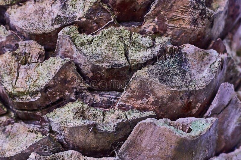 De textuur van de palmschors met groen mos royalty-vrije stock afbeelding