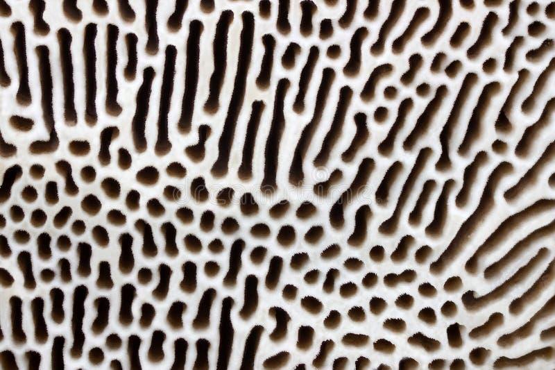 De textuur van Polypore stock foto