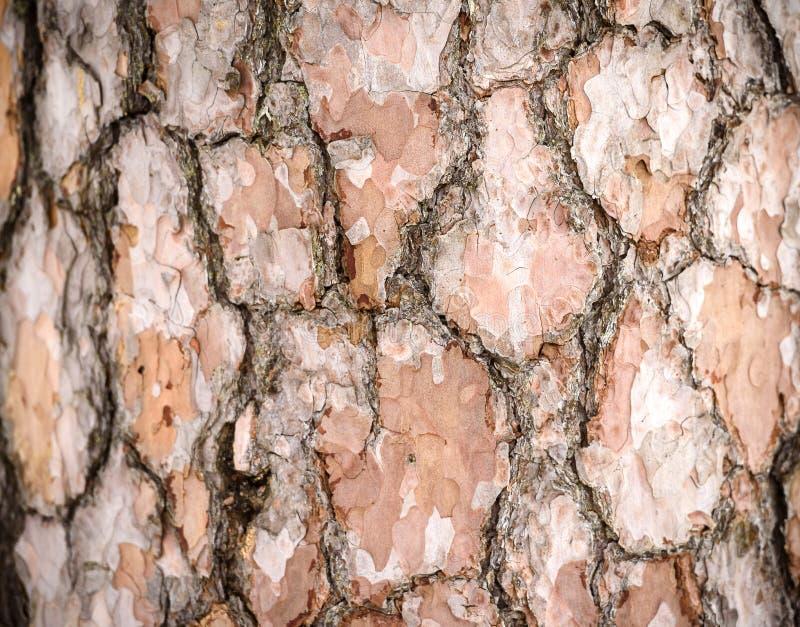 De textuur van de schors Concept energie naughty stock foto