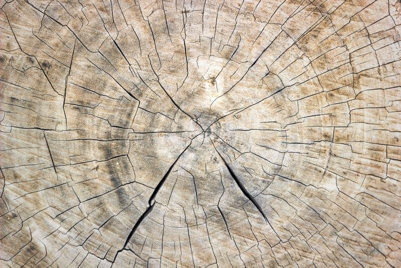 De textuur van de zaag sneed boomboomstam stock foto