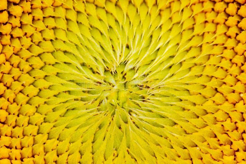 De textuur van de zonnebloemkleur, de overgang van de gradiëntkleur stock foto