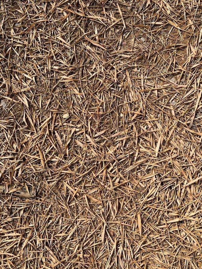 De textuurachtergrond van bamboebladeren stock foto's