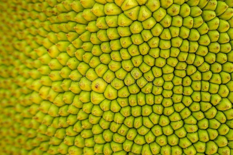 De Textuurachtergrond van close-upjackfruit stock afbeeldingen