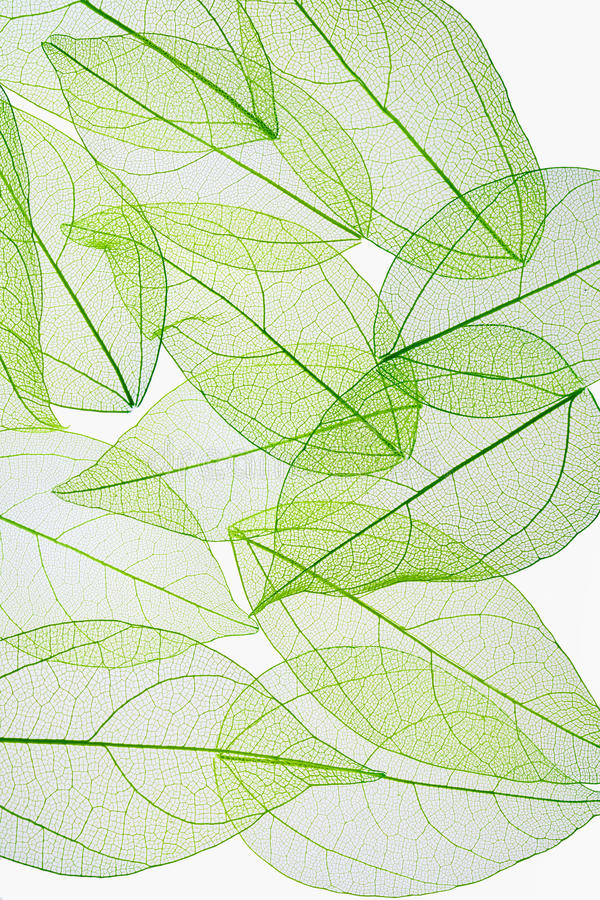 De textuurachtergrond van de bladader stock fotografie