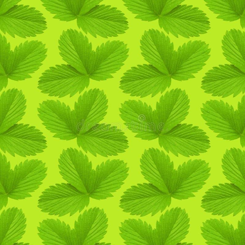 De textuurpatroon van het aardbeiblad Installatie ackground stock foto