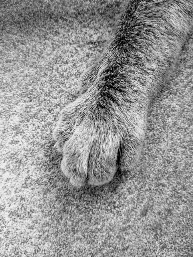 De textuurvloer van de kattenhand stock afbeelding
