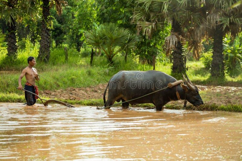 De Thaise landbouwer werkt het stromen met een buffel stock foto