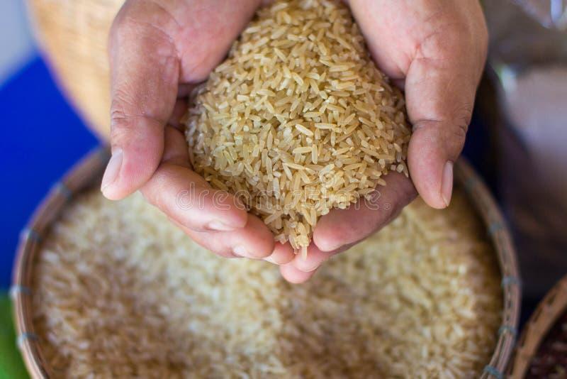 De Thaise rijst van Jusmine/Hawm Mali Rice /Jusmine/Riceberry-rijst stock fotografie