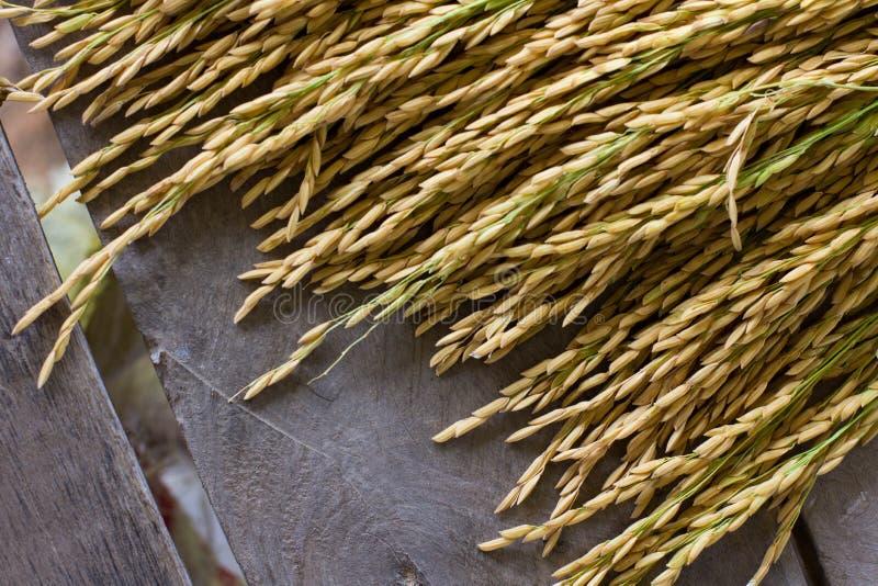 De Thaise rijst van Jusmine/Hawm Mali Rice /Jusmine/Riceberry-rijst stock afbeeldingen