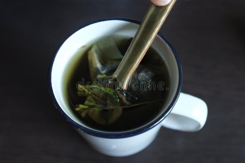 De thee met Groen en dired Stevia-bladeren royalty-vrije stock foto's