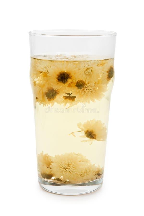 De thee van de Bloem van de chrysant stock foto