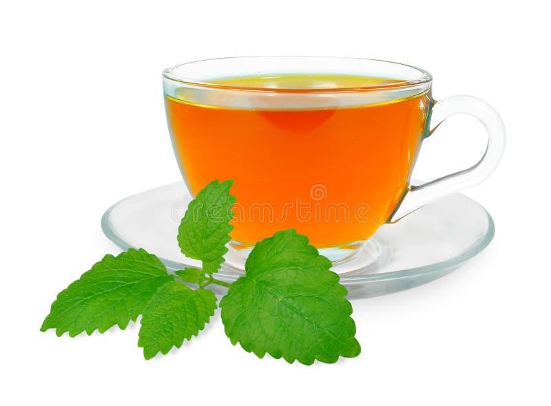 De thee van de citroenbalsem royalty-vrije stock afbeeldingen