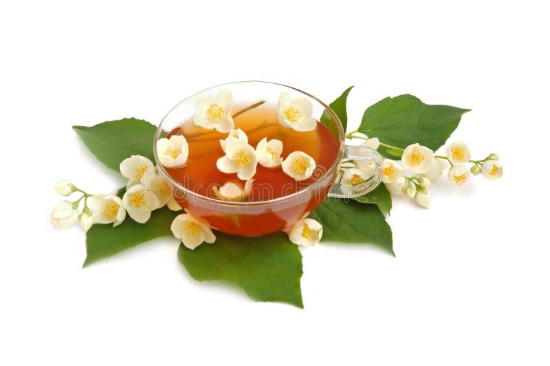 De thee van de jasmijn stock afbeelding