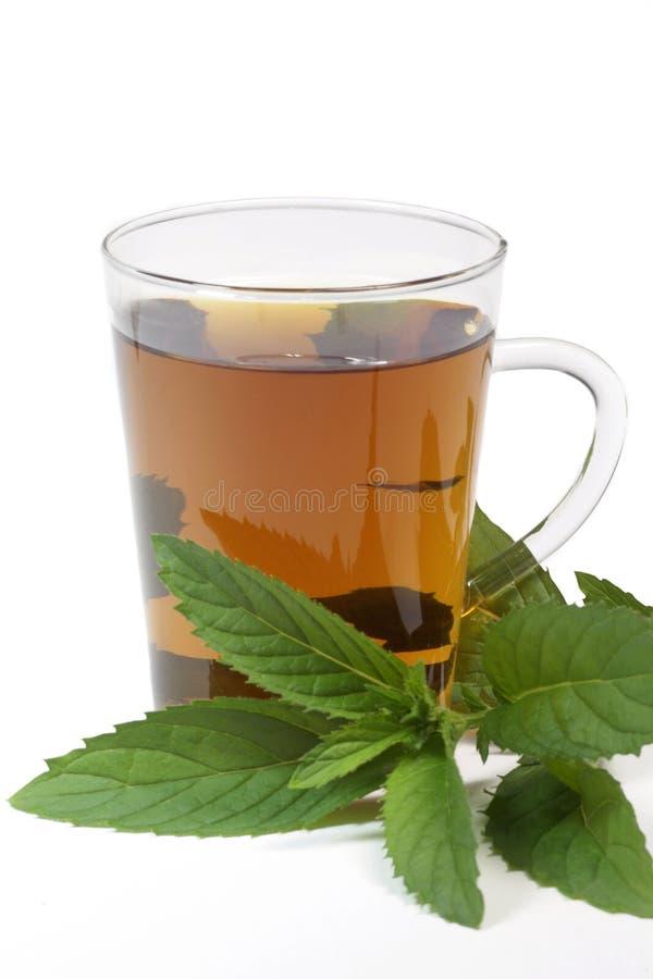 De thee van de pepermunt stock foto's