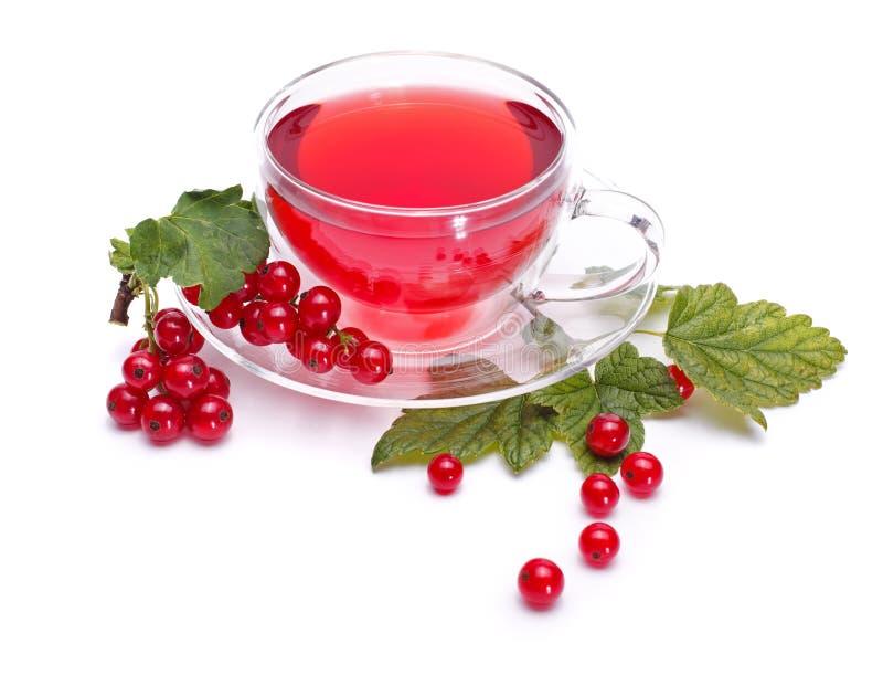 De thee van de rode aalbes stock foto's