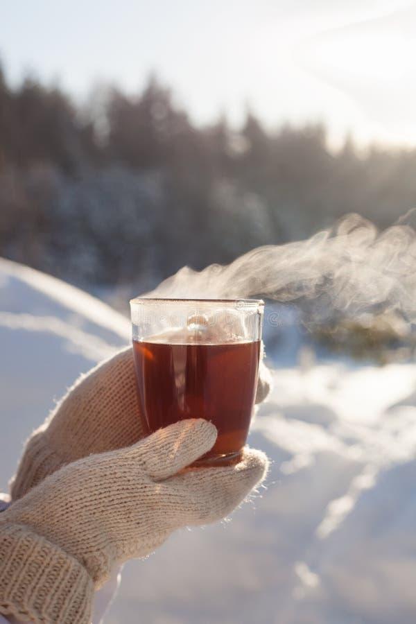 De thee van de winter stock foto's