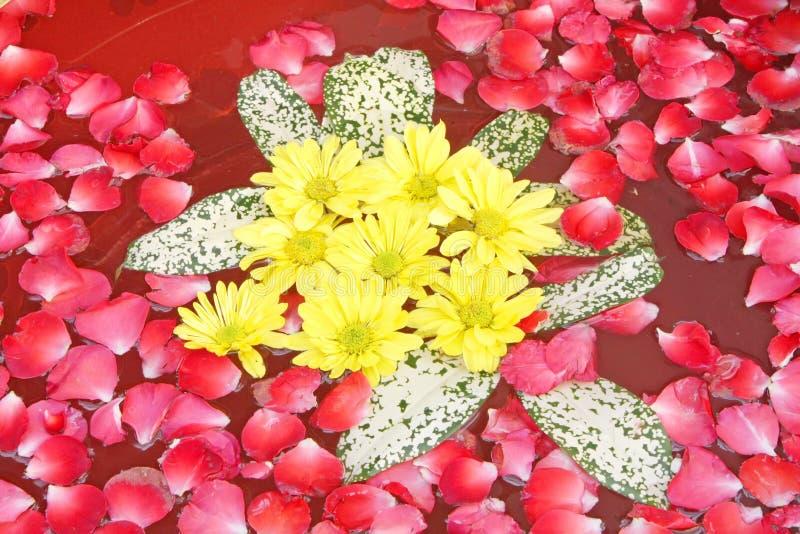 De Therapie van het Aroma van de Bloemen van de Ontspanning van het kuuroord stock afbeelding