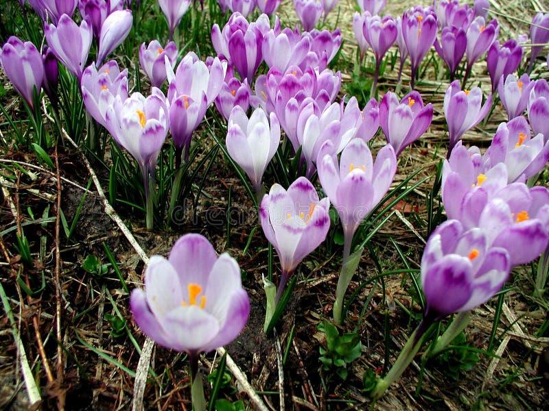 De tijd van de lente