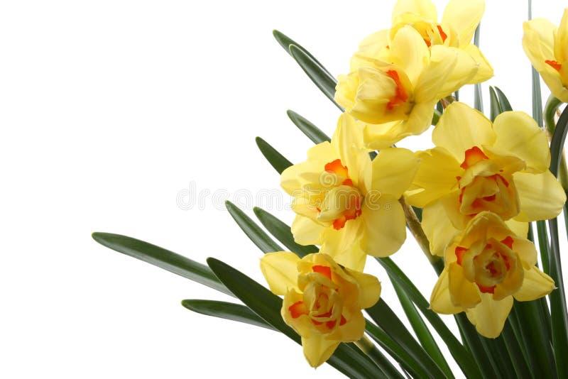 De tijd van de lente! stock afbeelding