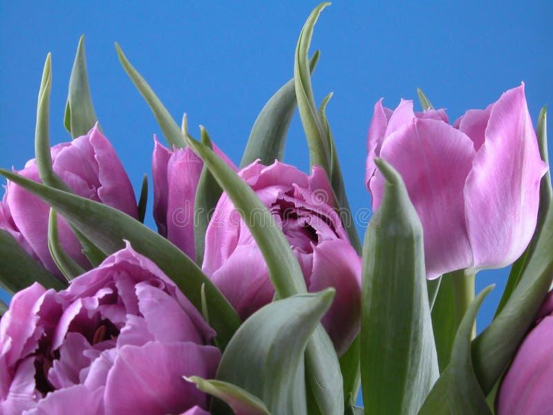 De tijd van de lente royalty-vrije stock fotografie
