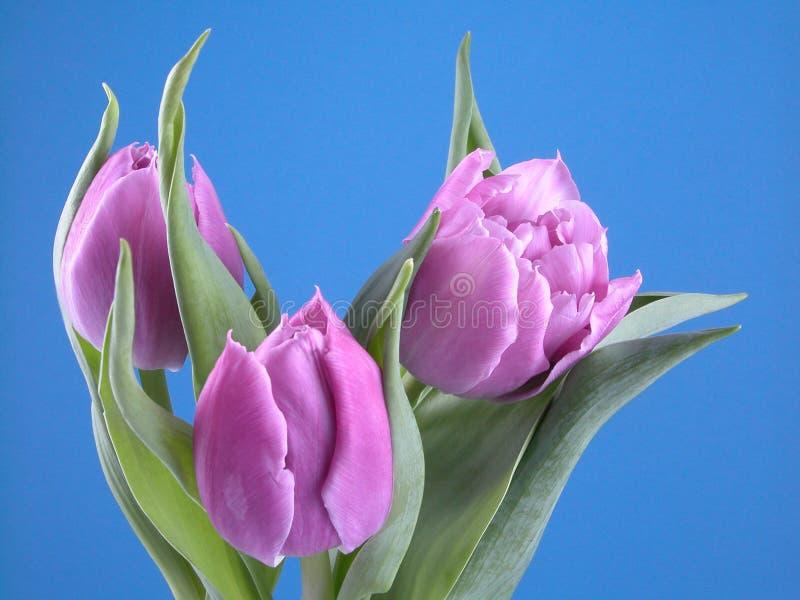 De tijd van de lente stock foto's