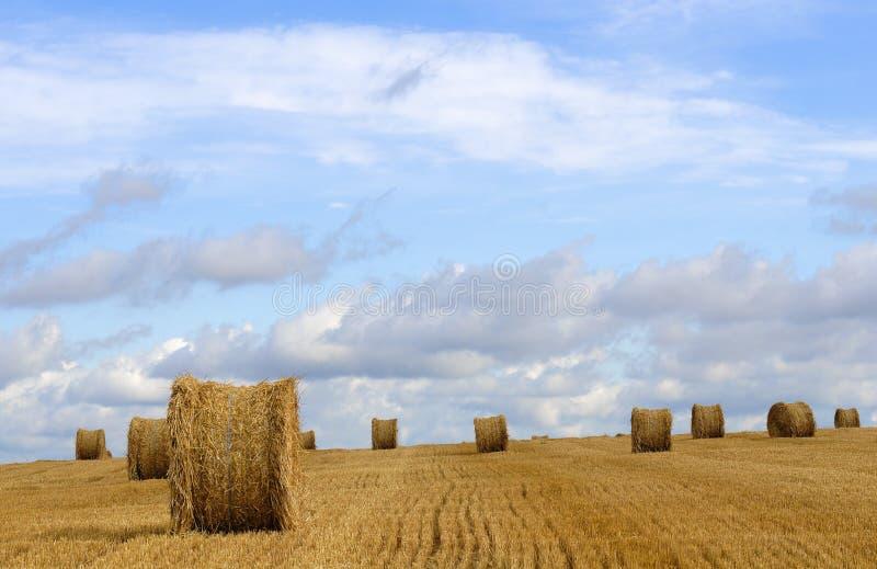 De tijd van de oogst royalty-vrije stock afbeelding