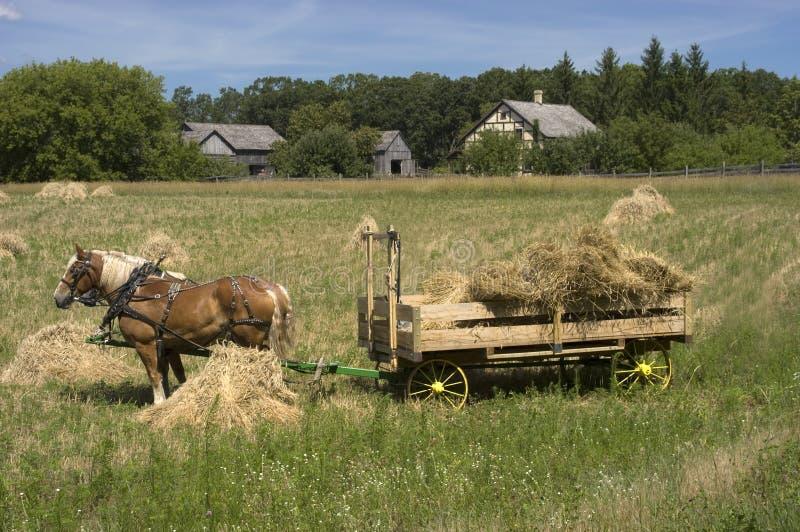 De Tijd van de Oogst van het Landbouwbedrijf van de Wagen van het Hooi van het Team van het paard royalty-vrije stock afbeelding
