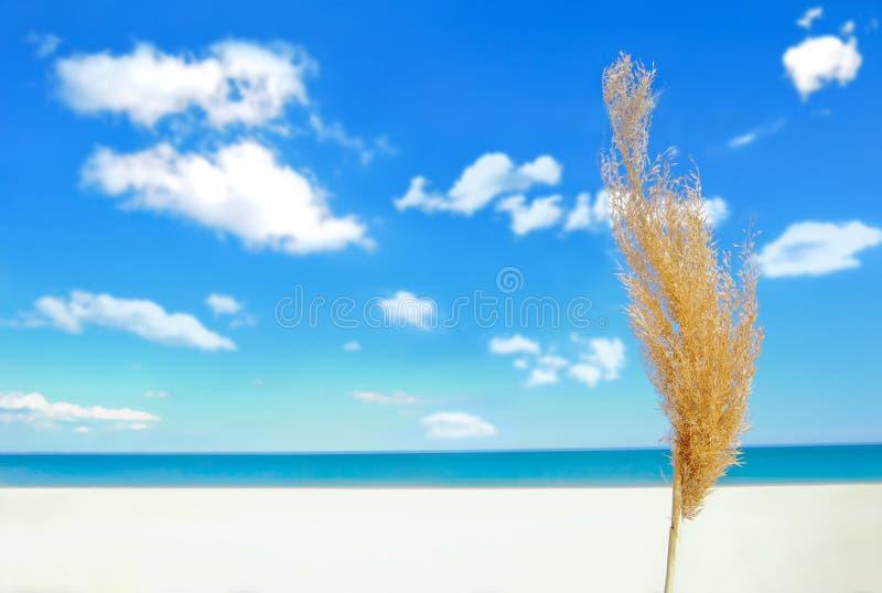 De Tijd van de zomer royalty-vrije stock afbeeldingen
