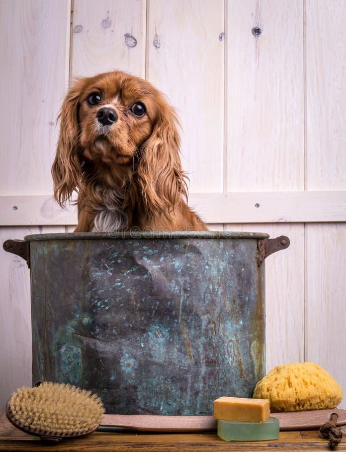 De Tijd van het Bad van het puppy stock fotografie