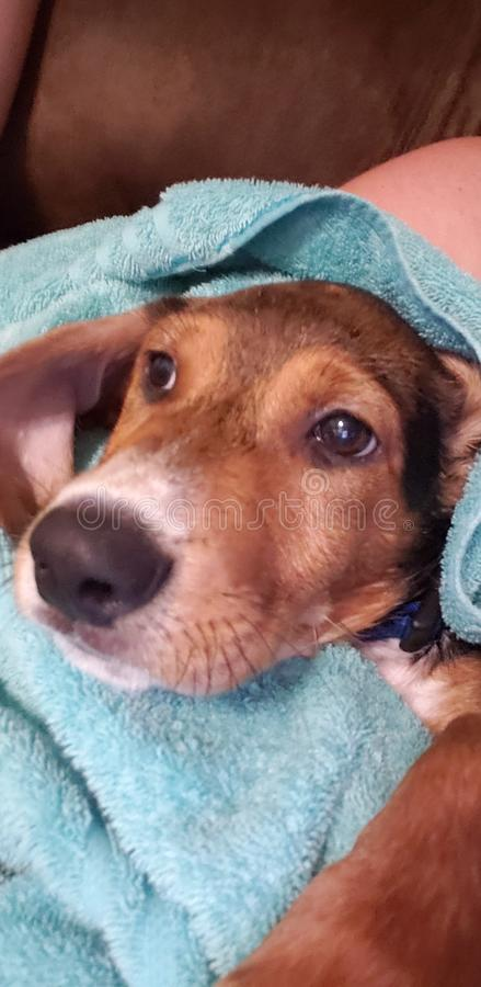 De tijd van het puppybad! stock afbeeldingen