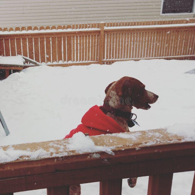 De tijd van de sneeuw stock foto