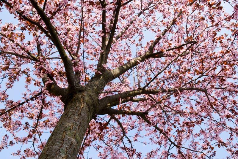 De tijdboom van de lente royalty-vrije stock foto
