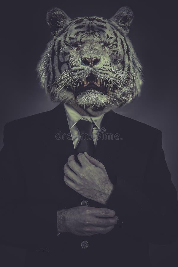 De tijger-geleide mens kleedde zich in kostuum en band stock foto's