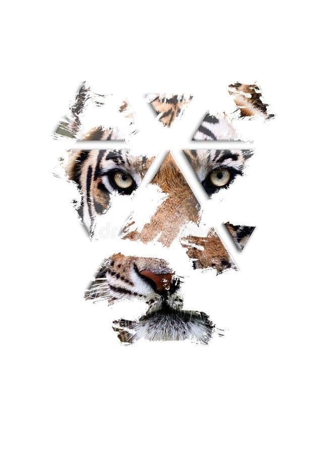 De tijger let op u, fijn art. stock foto's