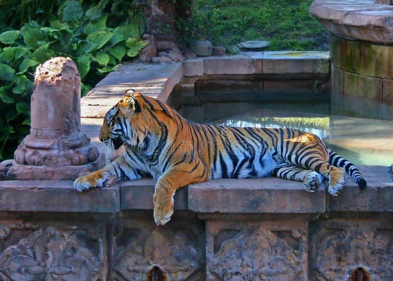 De Tijger van Bengalen bij Dierenrijk royalty-vrije stock foto's