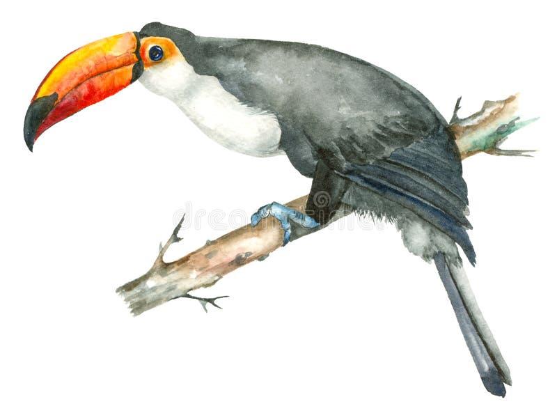 De toekan van de waterverfvogel royalty-vrije illustratie
