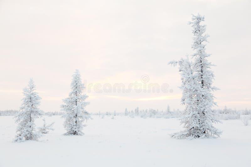 De toendra van de winter stock fotografie