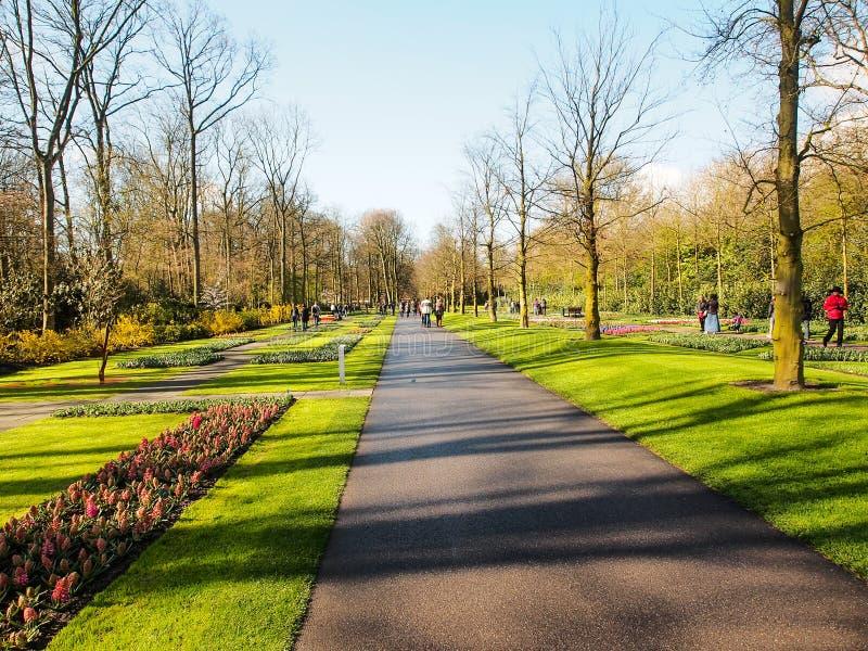 De toerist geniet van mooie tulpentuin in Keukenhof 2016, Amsterdam, Nederland stock foto