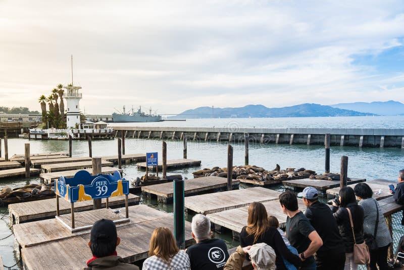De toerist ziet vele Zeeleeuwen op pijler 39 in San Francisco de V.S. zonnebaden royalty-vrije stock foto