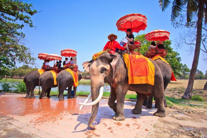 De toeristen berijden olifanten in Ayutthaya-provincie van Thailand royalty-vrije stock afbeelding