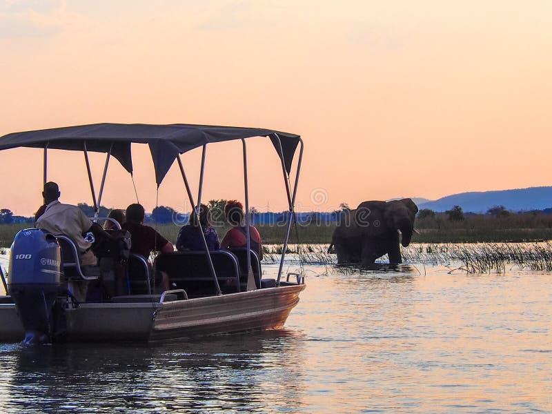De toeristen op boot kruisen het letten op olifant weggaand de Zambezi rivier royalty-vrije stock afbeelding