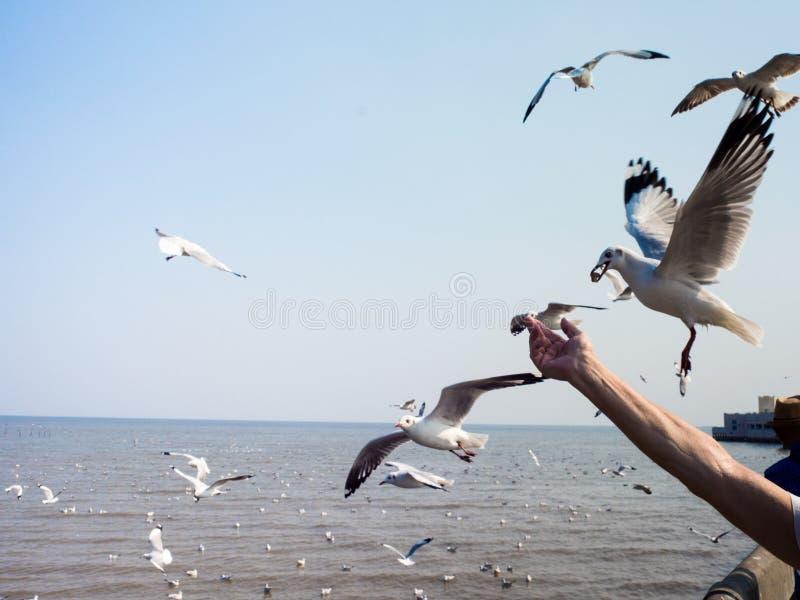 De toeristen voedende zeemeeuwen bij Bangpoo-Strand, SAMUTPRAKARN, THA stock fotografie