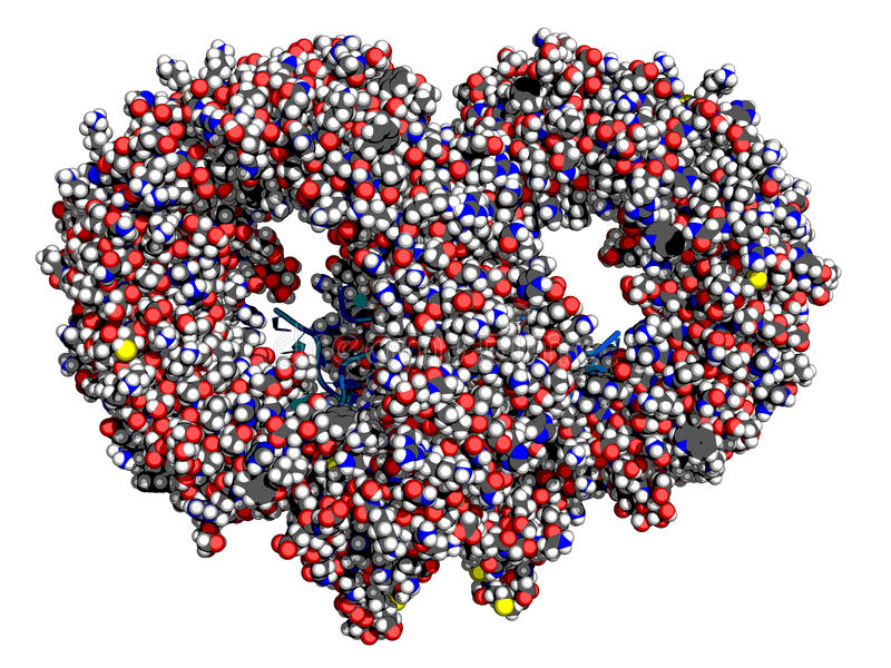 De tol-als receptor van TLR13 verbindend aan RNA, space-filling model stock illustratie