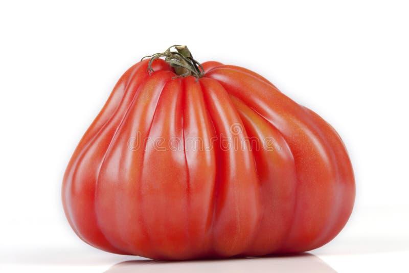 De tomate étrange d'isolement sur le blanc images libres de droits