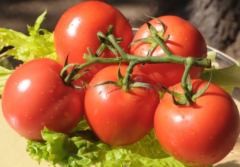 De tomaten met regen laat vallen 3 stock foto